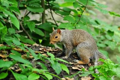 Un énième écureuil pris sur le vif