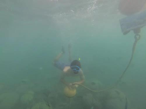 snorkeling-ilot-canards