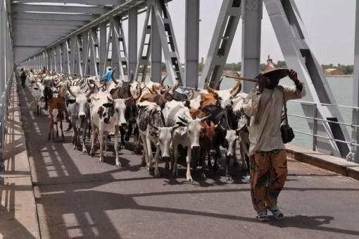 Mali 2010