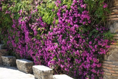 Plantes grimpantes dans le jardines de puerta oscura