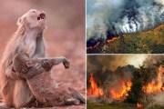 Yo aprovecharía los incendios en la Amazonía para invadir Venezuela