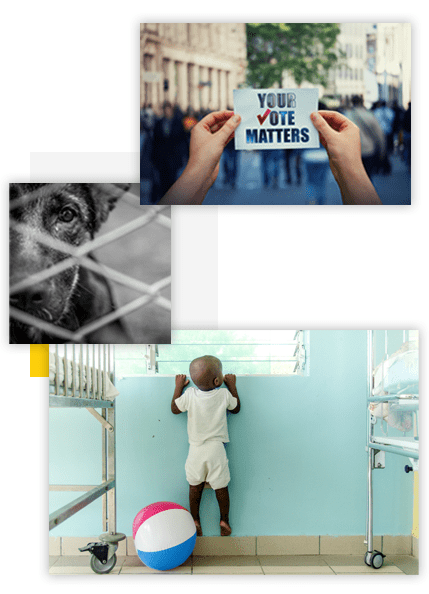 Collage of social impact campaign images: rescue dog at animal shelter, person holding a campaign sign at a voting rights protest, small child reaching to peek out of a hospital window in Haiti