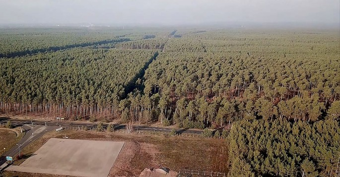 92 hectares of trees will be destroyed for the construction of Tesla
