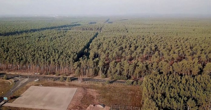 92 hectares of trees will be destroyed for the construction of Tesla's Gigafactory
