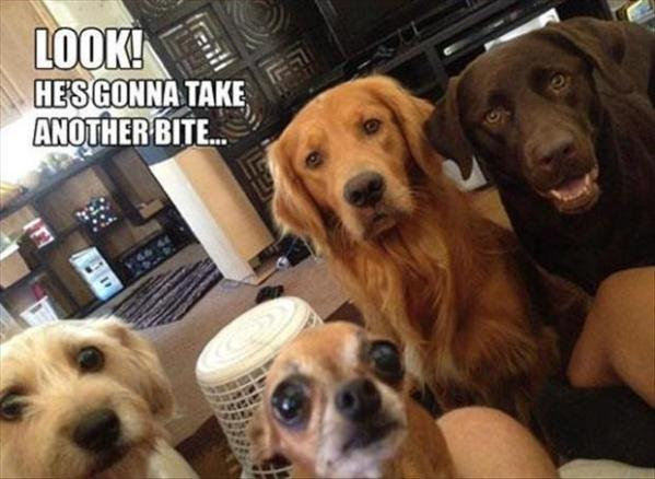 dogs show funny pic