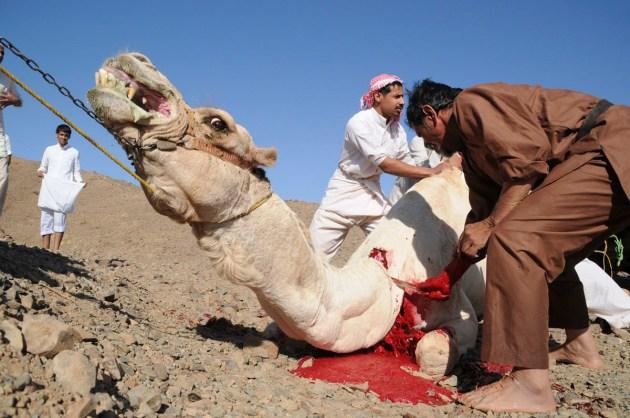Eid-Ul-Adha-Camel-Sacrifice-hd-photo