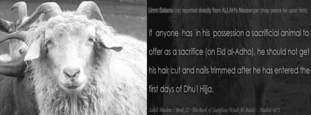 Eid Ul Adha facebook cover photo