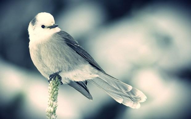 cute snow sparrow