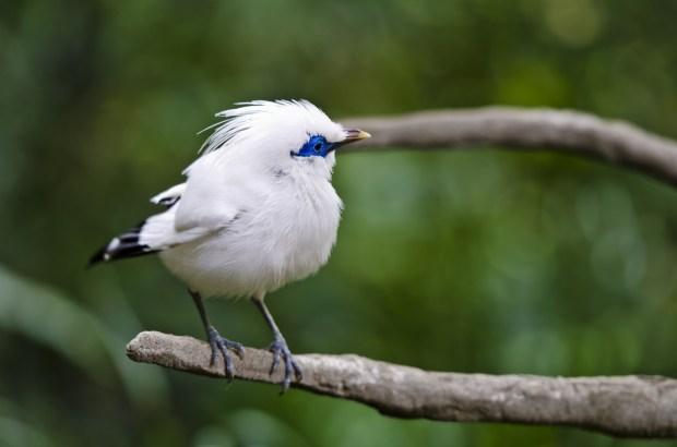 cute white blue color small bird