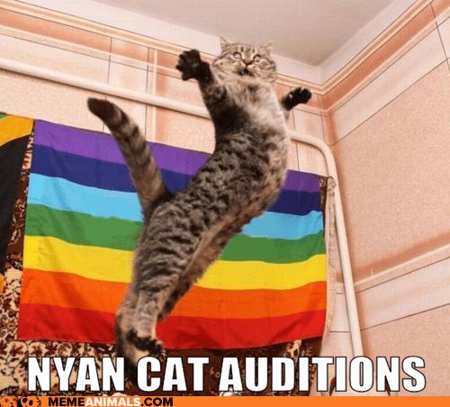 cute-funny-Cat-meme-4