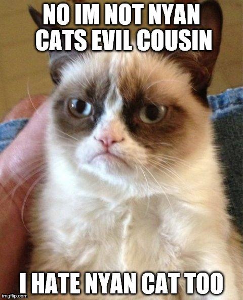 cute-funny-Cat-meme-5