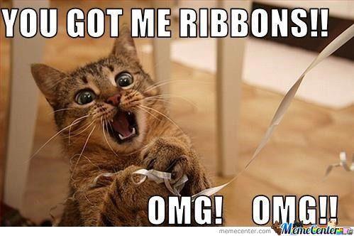 cute-funny-Cat-meme-7