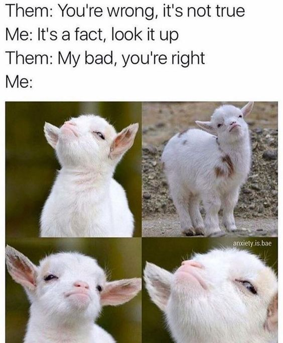 baby goat images