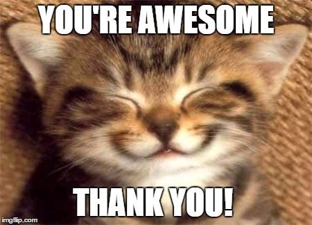 cute kitten smiling funny thank you meme pics