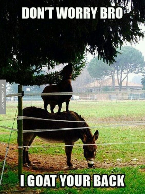 funny farm goat caption images