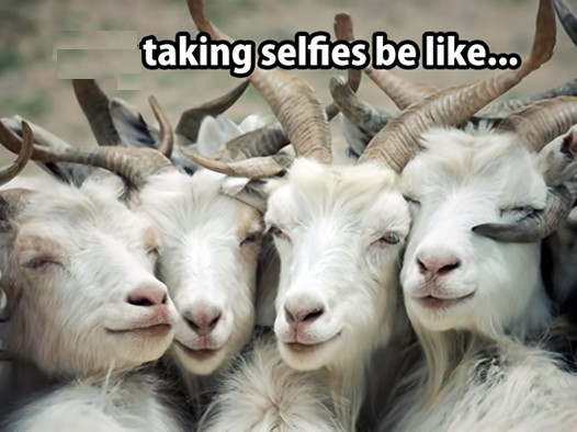 funny goats picture with caption