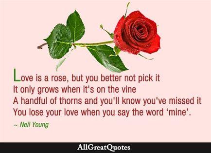 rose love quotes