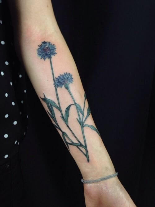 cornflower tattoo design on forearm for females