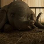 Dumbo, toma vuelo