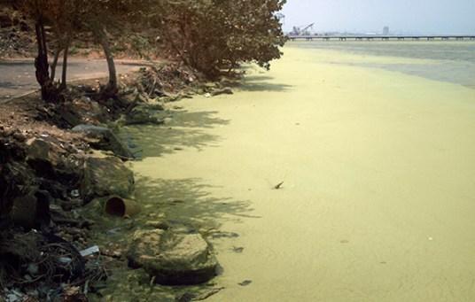 Aguas_del_lago_de_Maracaibo_contaminadas_por_Lemna_03b