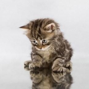 chaton-miroir
