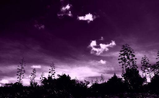 800px-Purple_dream_at_Masai_Mara