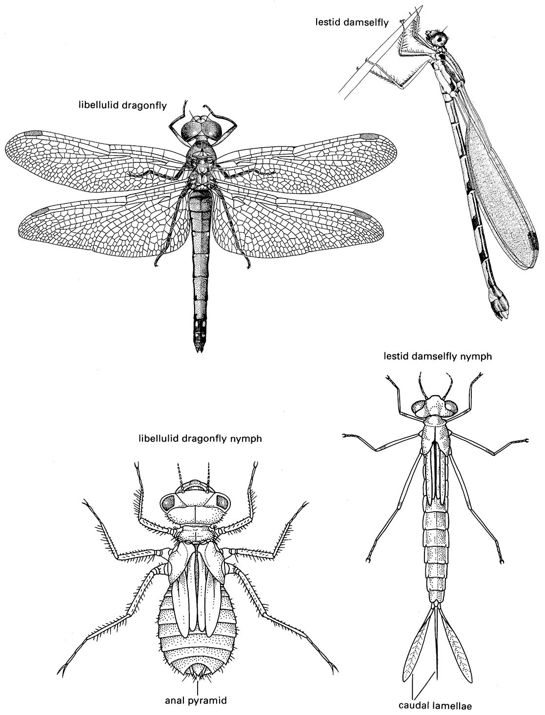 Odonata Damselflies And Dragonflies Boxes