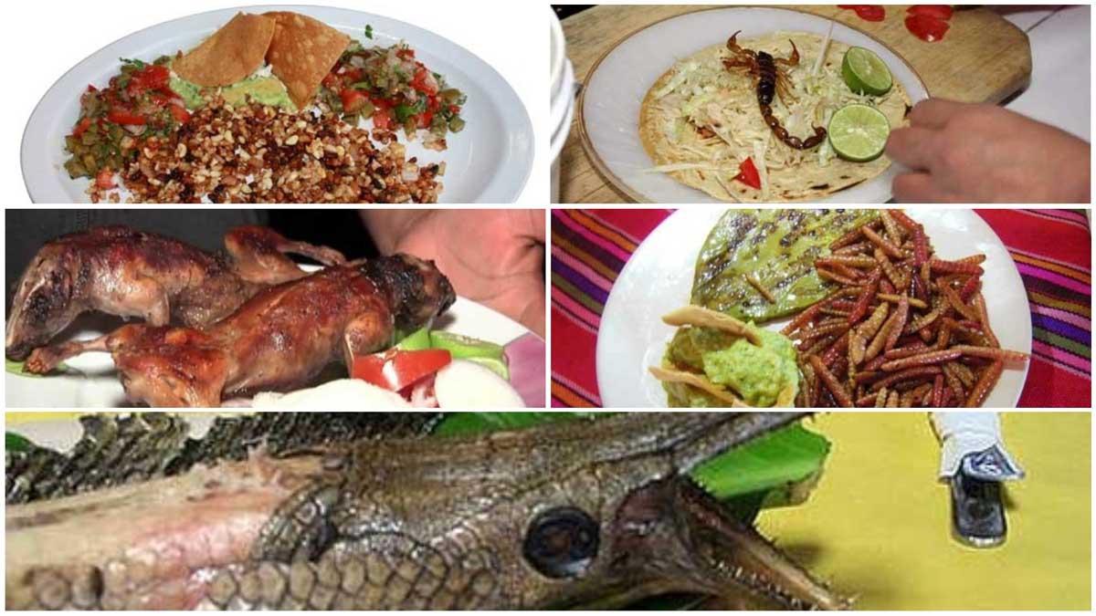 Gastronoma mexicana extica slo para osados  Entorno