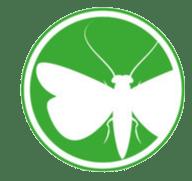 insetti-volanti