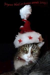 Chat Joyeux Noël 2015