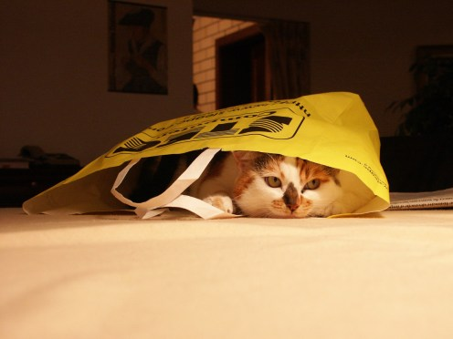Cats like bags