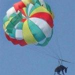 Justicia: Prisión a los responsables que hicieron volar al burro