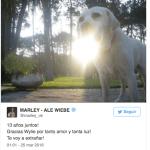 La tristeza de Marley: murió su perro Wylie: Fuerza desde acá entendemos tu tristeza