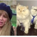 """Daniela Cardone y la decisión de embalsamar a sus tres gatos: """"Los tengo en la mesita de luz de mi cuarto"""""""