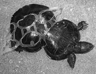 Efectos de los desechos plásticos en los ríos, los lagos y el mar de Guatemala