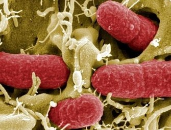 La bacteria invencible
