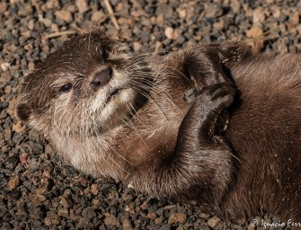 """An otter is the victim of poor education and Guatemala's violent """"culture"""""""