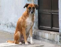 La calidad de vida de un perro callejero, es el reflejo de la vida en Guatemala