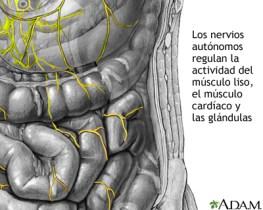 Neuropatía 3
