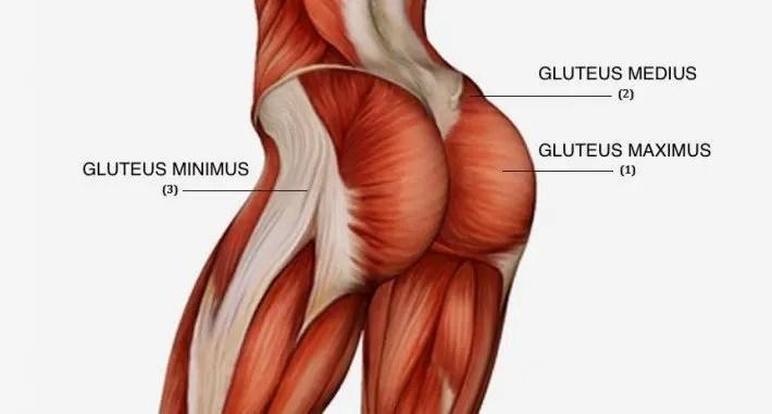 anatomía del glúteo