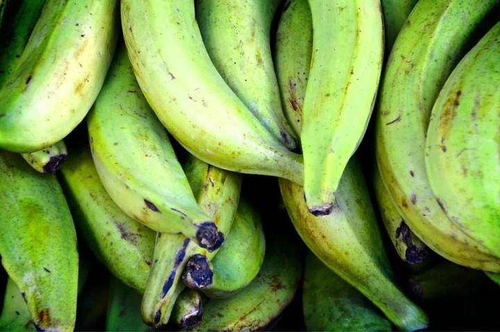 Almidón resistente del plátano verde