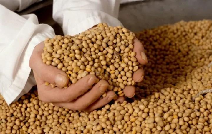 La soja fermentada elimina sus efectos negativos