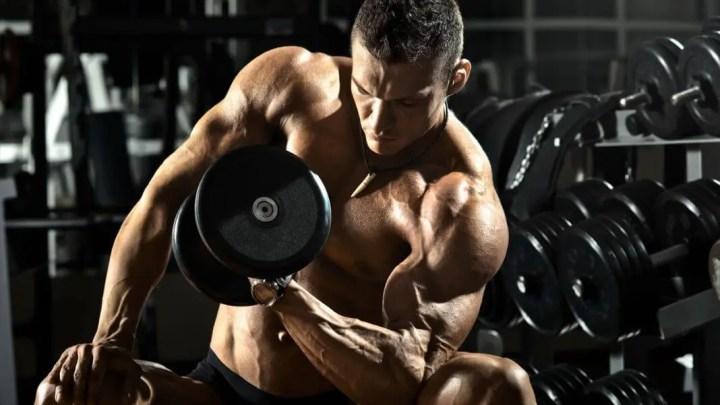 Guía acerca de la anatomía de los bíceps