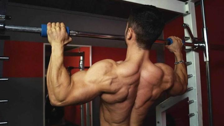 Longitud del sarcómero de trabajo del músculo del dorsal ancho