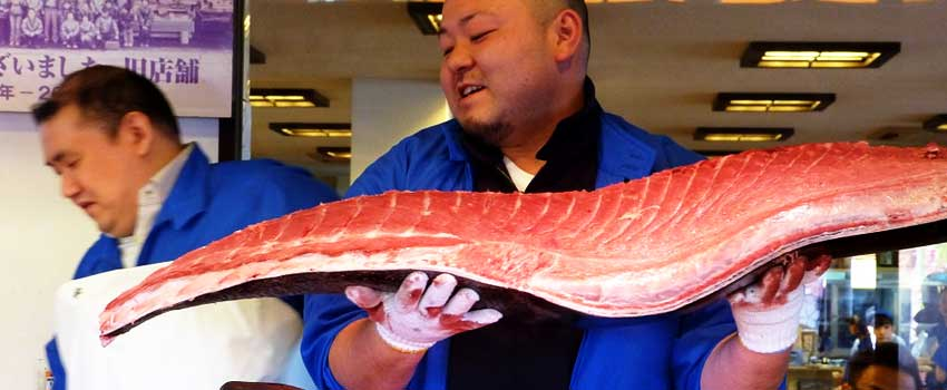 Chinese Billionaire betaler $614,000 For Pacific Bluefin Tuna