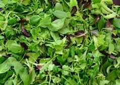 Misticanza (plato de hierbas)