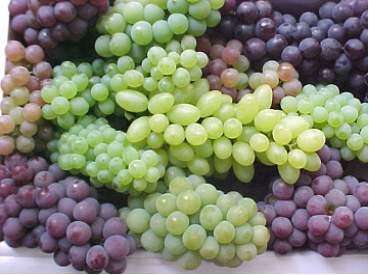 Las uvas, un poderoso alimento natural (II)