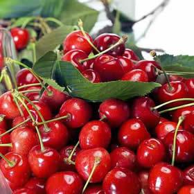 Todo acerca de las cerezas (II)