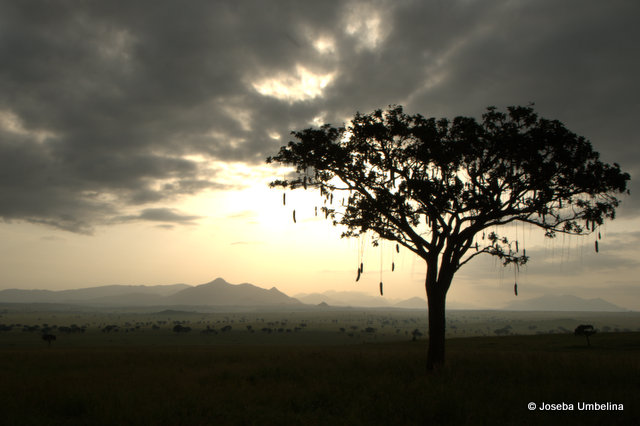 El paisaje del Parque Nacional del Valle de Kidepo, Uganda