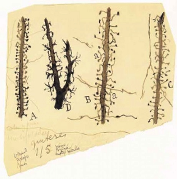espinas-cajal-dibujob-461x468